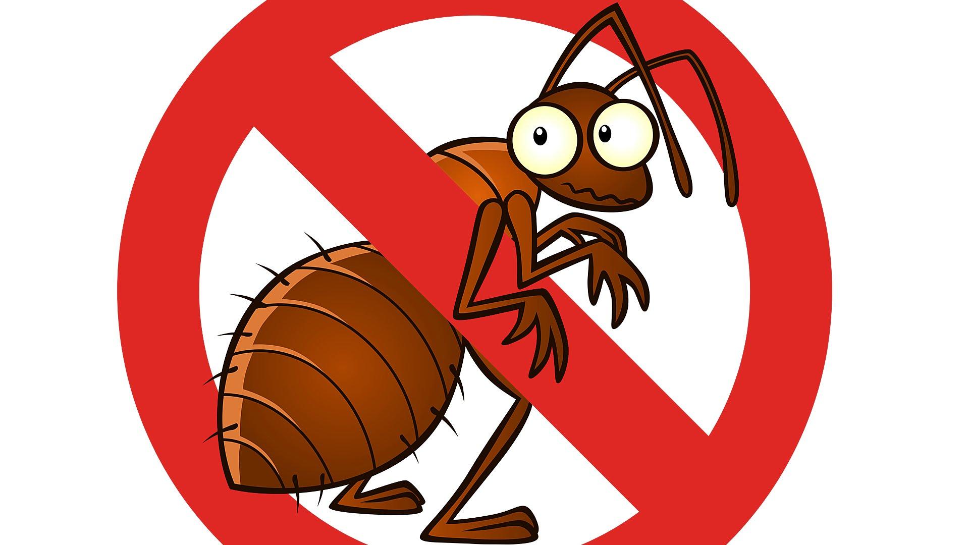 شركه مكافحه حشرات براس تنوره